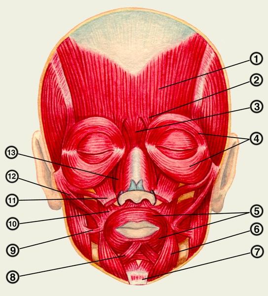 магнитотерапия при ишемической болезни сердца