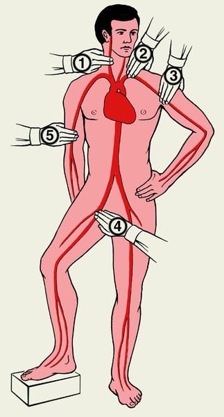 Секс точки на теле человека