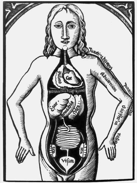 Строение внутренних органов.  Рисунок из книги по анатомии для студентов, XVI в.