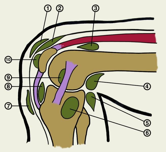 области коленного сустава: