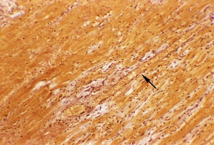 диетолог эндокринолог в нальчике