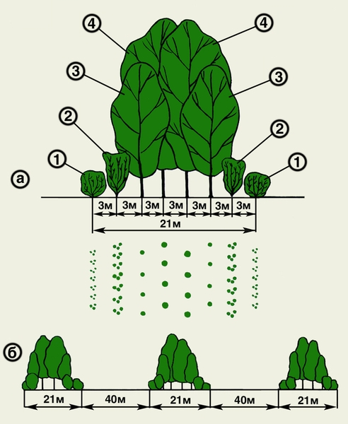 Рекомендуемая схема посадки защитных полос из деревьев и кустарников: а- профиль и план конструкции лесозащитной...