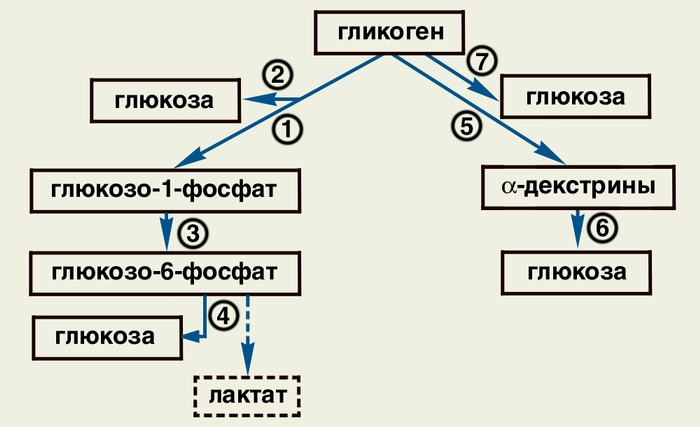 Схема распада в организме