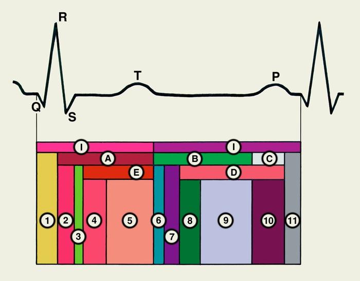 Цикл Сердечный фото