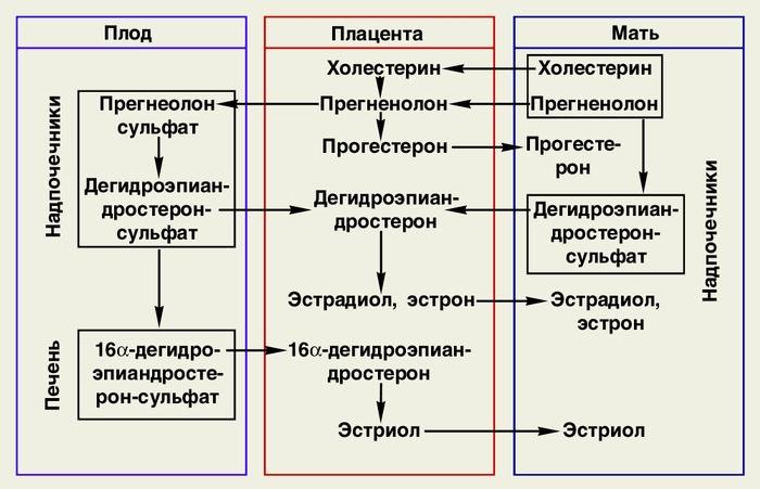 Схема основных этапов синтеза