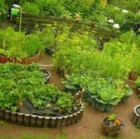 Чем на самом деле полезна и опасна свежая огородная зелень