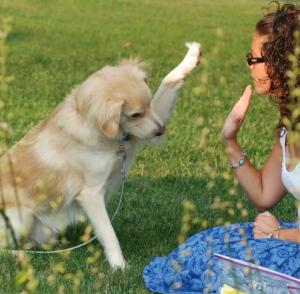 Собака - лучший диагност болезней человека