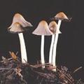 Кожные грибки
