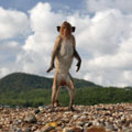 Какая болезнь подобна обезьяне?