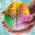 Интеллект можно повысить искусственно
