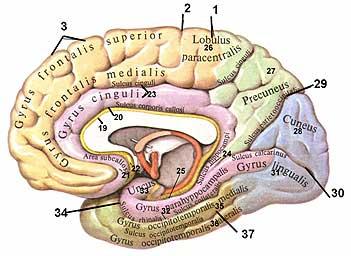 Плацебо (8) Нейрология