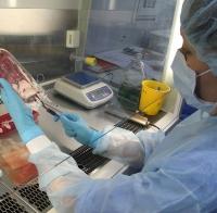 Обман на стволовых клетках и пуповинной крови