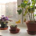 О пользе комнатных растений