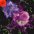 Мифы об иммунитете