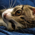 Зачем нам кот в аптечке, или Как мы лечимся мурлыканьем?