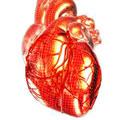 Слабое сердце обязывает...